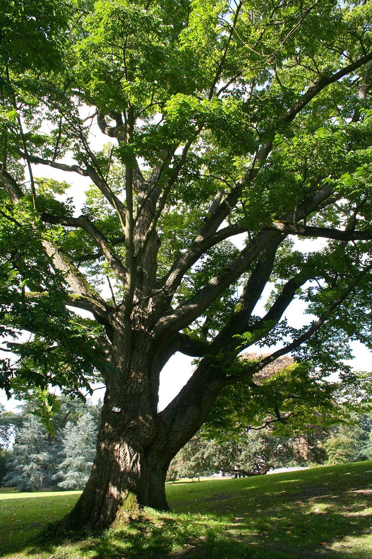 деревья приморского края фото названия меньше