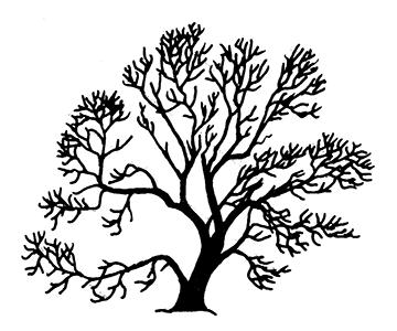 Типичная форма кроны