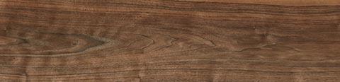 Описание и история происхождения черного ореха
